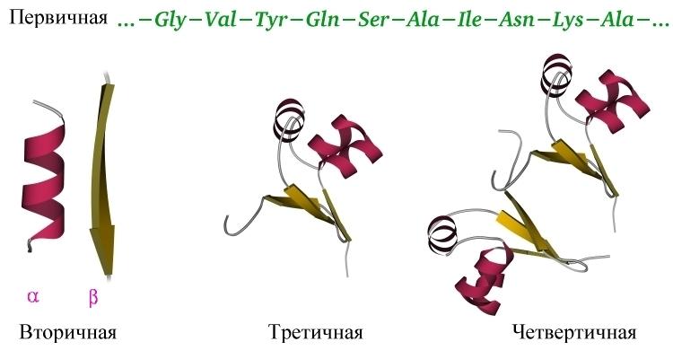 Первичная структура днк и рнк